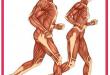با عضلات بدن انسان آشنا شویم