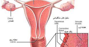 بهترین آموزش ورزش تقویت عضلات واژن برای تنگی واژن
