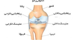 the mosyt important Knee Problems
