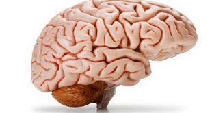 بهترین روش برای کارایی مغز