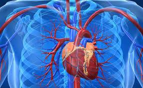 آرتریت روماتوئید احتمال حمله قلبی را بالا می برد!